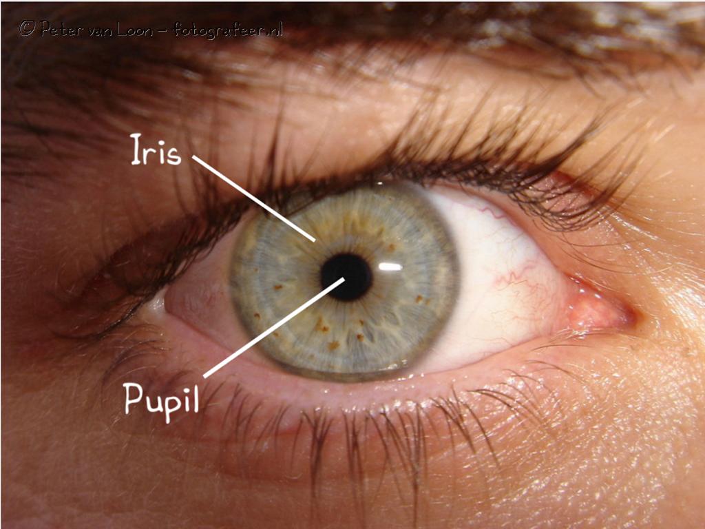 Iris-Pupil.png