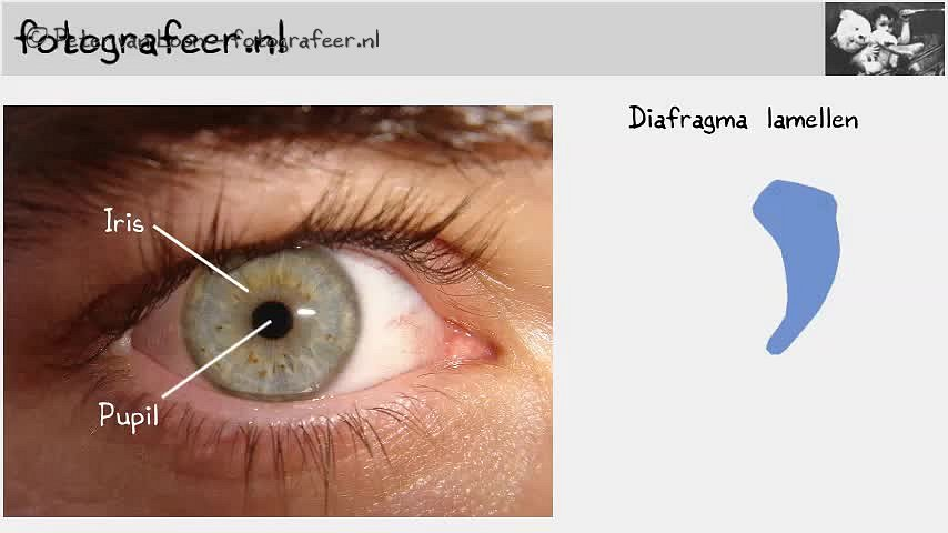 Diafragma.mp4